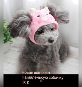 Шапочка для собачки