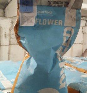 Гибридные семена подсолнечника Cobalt II (Nuseed)