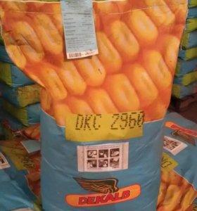 Гибридные семена кукурузы DKC2960 (Монсанто)