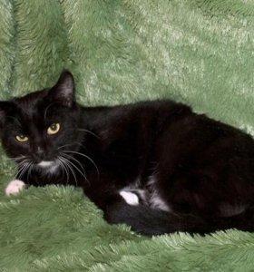 Честер, обаятельный домашний котик-подросток в дар