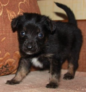Спасите маленьких щенят