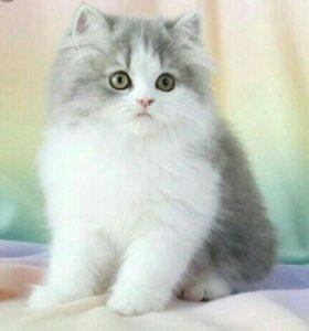 Возьму котёнка
