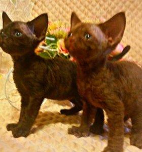 Очаровательные котята-эльфы