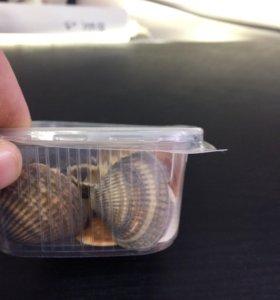 Ракушки для аквариумистики
