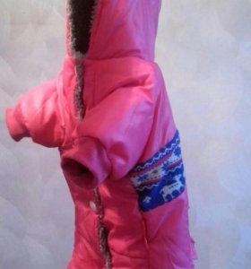 Зимний костюм для чихуахуа