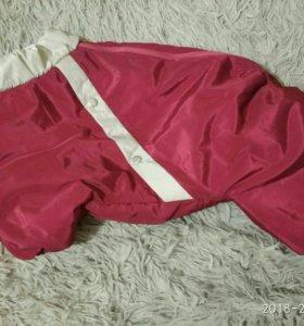 Курточка для собачки мелкой породы(Мопс)