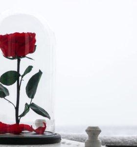 Роза в колбе Премиум (Франция)🌹