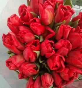 Тюльпаны к 23 февраля и 8 марта