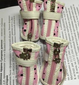 Ботиночки для маленькой собачки