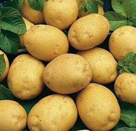 Картофель сорта адретта