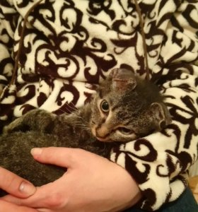 Отдам кота в добрые руки. 5 месяцев.