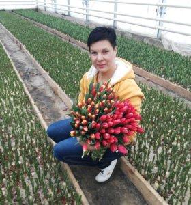 Тюльпаны к 8 МАРТА!