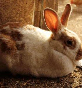 Продат мясо кролика