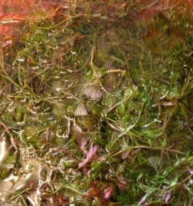 Аквариумные растения только состриг