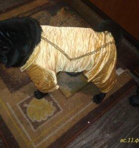Продам куртку на собаку небольших пород(мопс)