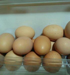 Яйцо куриное домашнее(крупное)