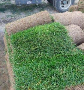 Рулонный газон (опт и розница)