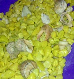 Камешки + ракушки для рыб