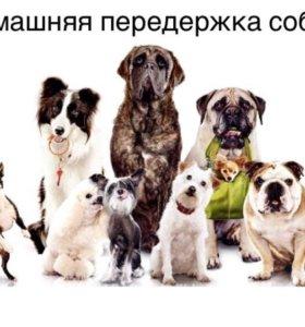 Домашняя передержка собак г.Магадан