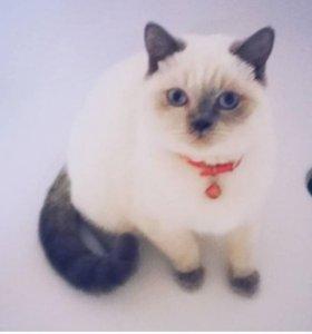 Вязка с котом