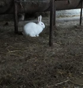 Кролики 500 по 300