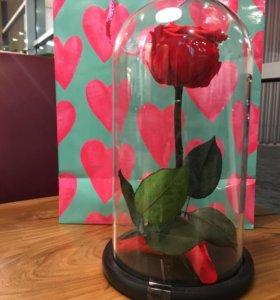 роза в колбе+пакет подарочный