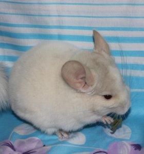 Бело-розовый гомобежевый фиолет
