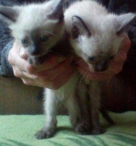 Милые котята ищут хозяев