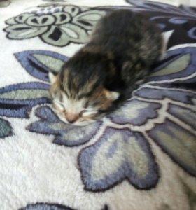 Отдам в добрые руки милого котю;)