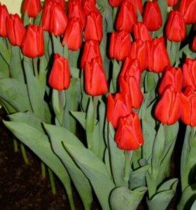 Заказ цветов к 8 марта доставка по Егорлыку