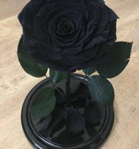 Уникальная чёрная роза в колбе!