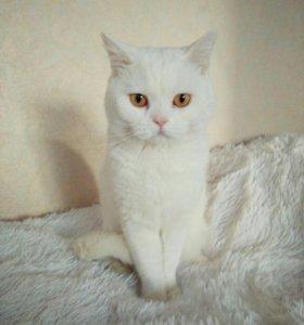 Вязка с белым котом