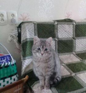 Котик, 7 мес