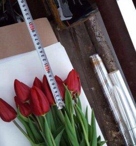 Тюльпаны-50р