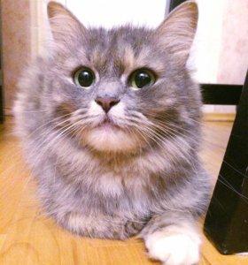 Ласковая кошка