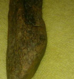 Окаменевший клык тиранозавра
