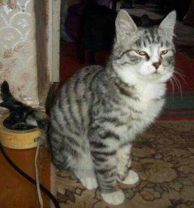 Отдам молодого котика