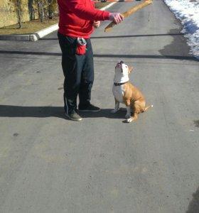 Дрессировка, передержка  собак всех пород