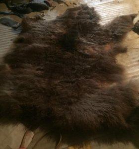 Медвежья шерсть
