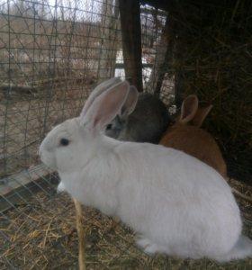 Кролики 3,5 - 4 месяца