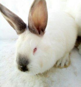 Кролики кроссы