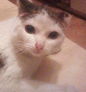 Кошечка любви