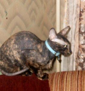 Кошка (Рекстаун)