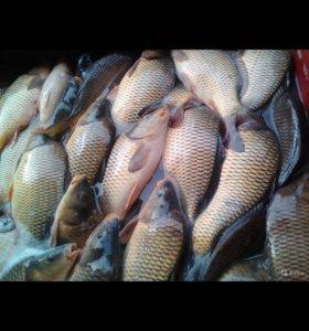 Свежая рыба на риализацию