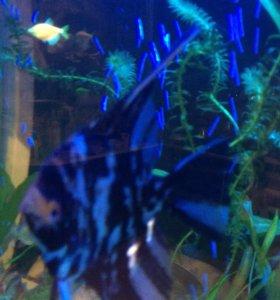 Рыбы для большого аквариума