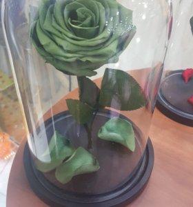 Роза в колбе(живая роза)