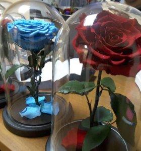 Роза в колбе,Стабилизированная роза,Вечная роза