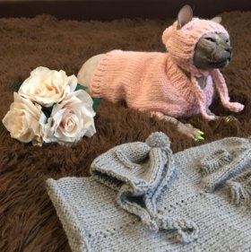 Комплект одежды для кошек