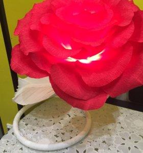 Цветок ночник