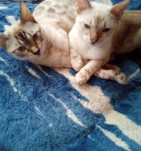 Котята,кошечки,котики